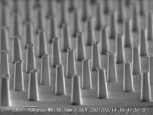 ソマレゾン、ハペ、電子顕微鏡写真