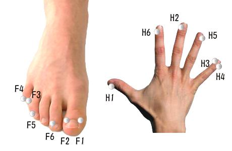 ピソマと手足のツボ